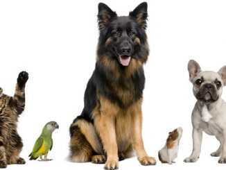 cropped-bigstock-group-of-pets-together-in-fron-8258867